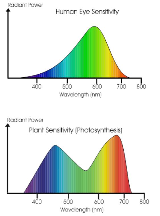 Plant photosynthesis response vs human-eye response