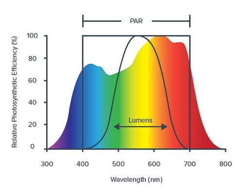 Light spectrum sensitivity comparison between human vision and plant photosynthetic response.