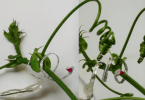 Tendril-like robot